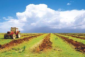 Чи потрібно реструктуризовувати сільськогосподарське підприємство?