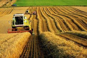 Що таке реструктуризація колективного сільськогосподарського підприємства?