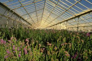 Концептуальна основа реформування колективних сільськогосподарських підприємств