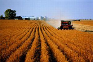 Створення селянських (фермерських) господарств
