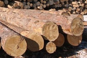 Необроблена деревина