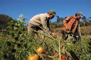 Що являє собою колективне сільськогосподарське підприємство (КСП)?