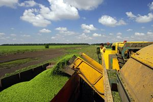 Механізм економічних відносин всередині сільськогосподарського підприємства