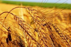 Ринок зерна