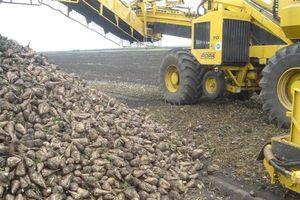 Ринок продукції цукробурякового виробництва