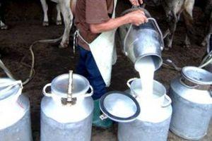 Ринок молока