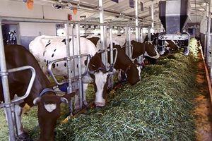 Підвищення ефективності тваринництва