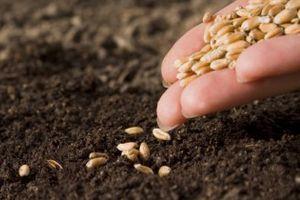 Хто є платниками фіксованого сільськогосподарського податку?