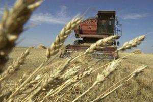 Розрахунок розміру валового доходу для платників фіксованого сільськогосподарського податку