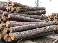Торги з продажу необробленої деревини (поставка ІІI квартал 2014 року)