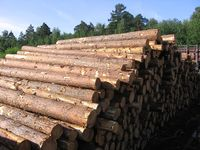 Торги з продажу необробленої деревини (поставка ІV квартал 2014 року)